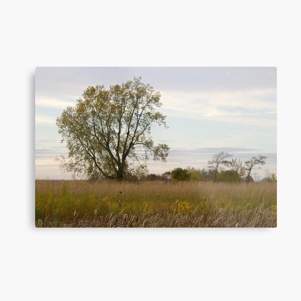 Tree in a Meadow Metal Print