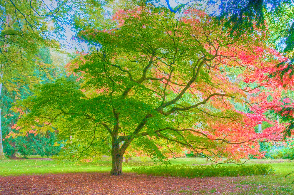 Golden Autumn by NalaRewop