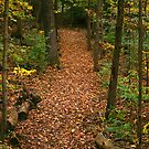 Leaf-Strewn Path by rdshaw
