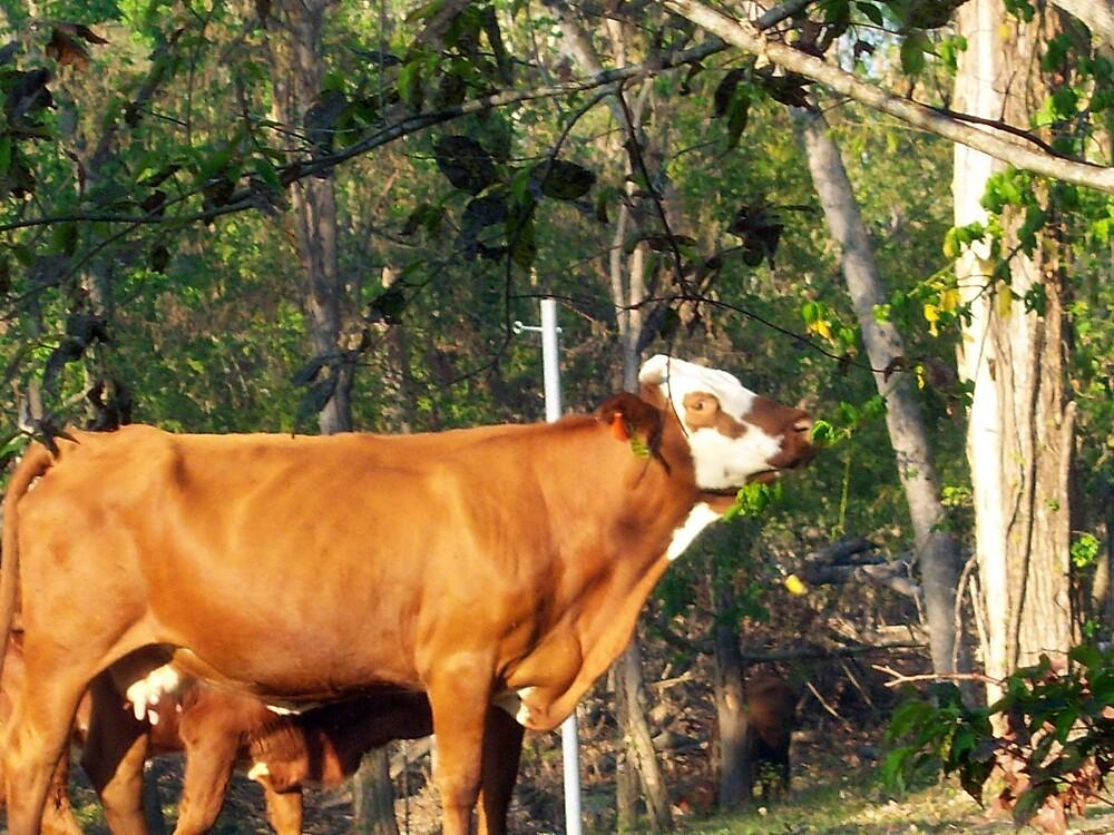 Texas Cattle by DottieDees