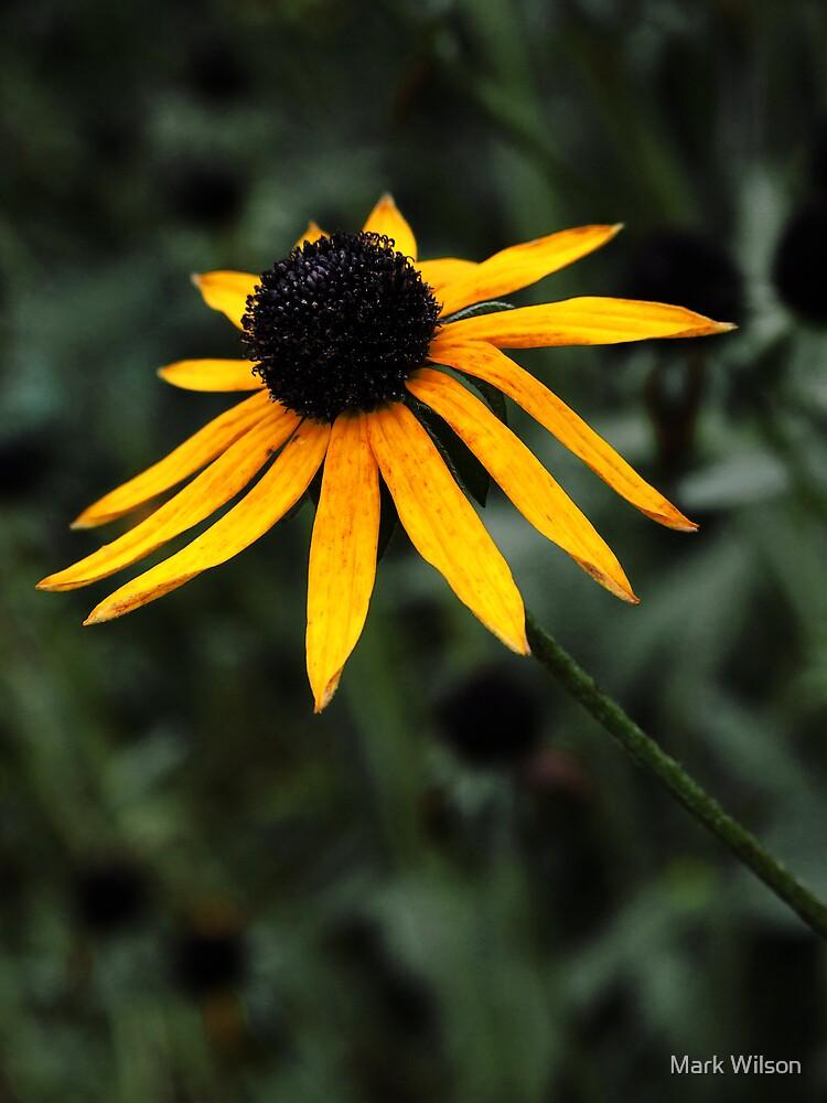 Wilting Flower by Mark Wilson