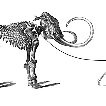 Pet Mammoth by metropol