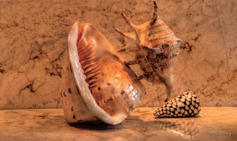 Shells XIII by andreisky