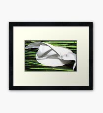 Tissue Anyone? Framed Print