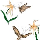 Moth Orchid Coevolution by LorraineRenee