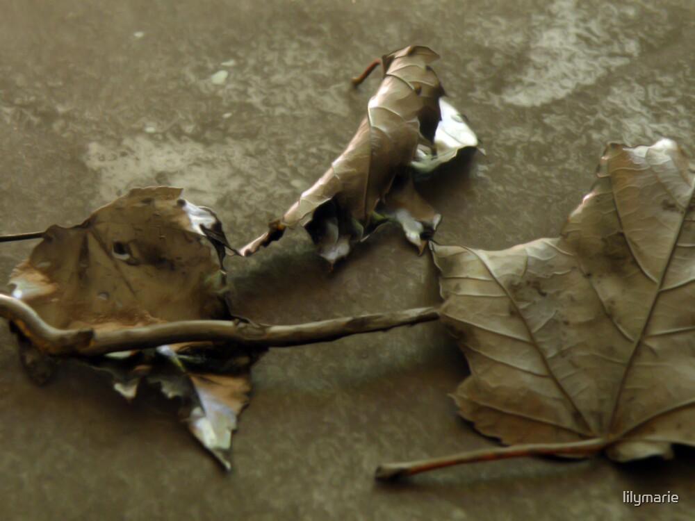 brown leaf by lilymarie