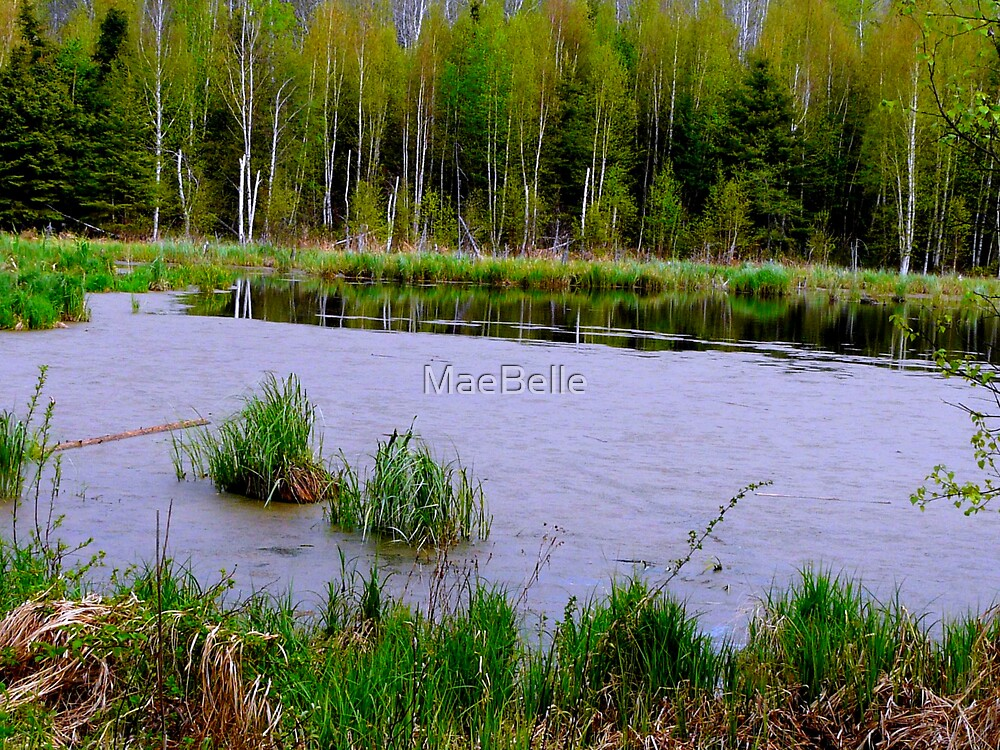 Beaver Pond in Spring by MaeBelle