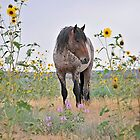 Roan Foal in Sunflowers by Kelly Jay