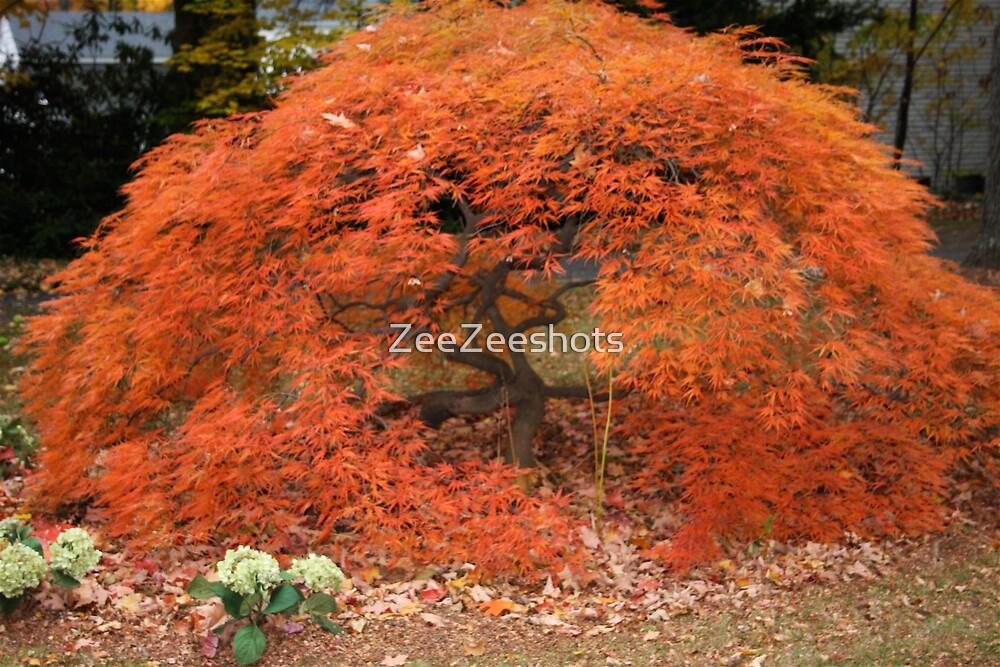 Japanese Red Maple Tree by ZeeZeeshots