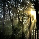 Dawn in the Ranges. by Anuja Manchanayake