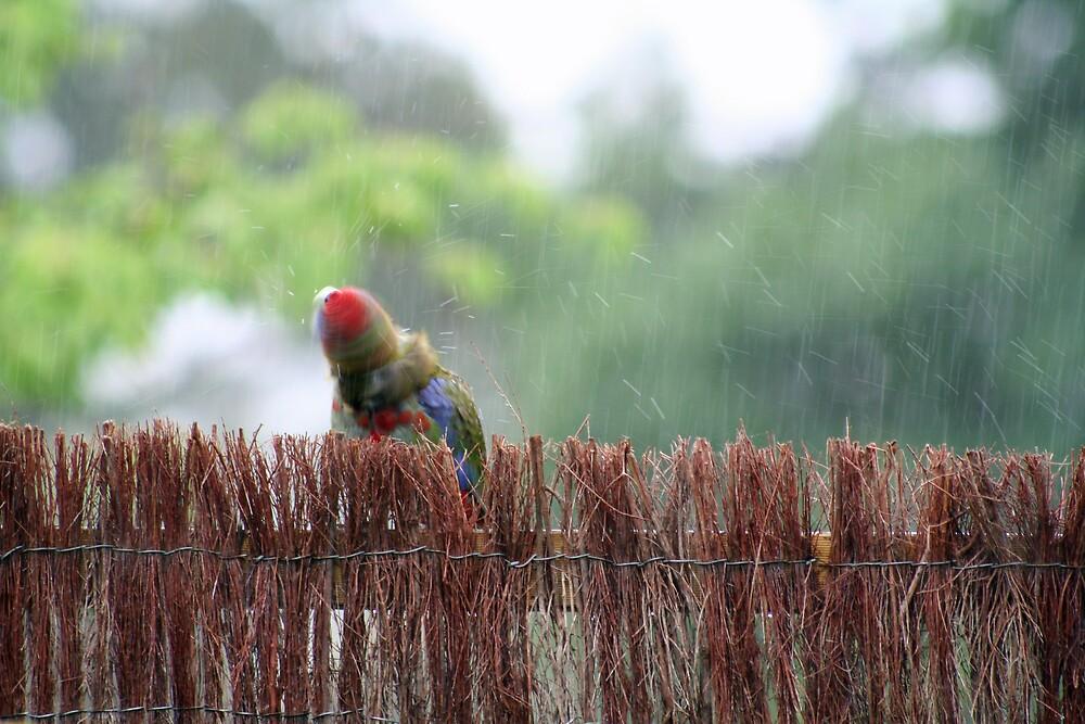 Wet bird by tlake