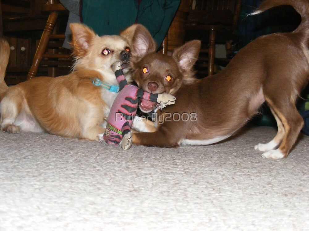 Tug of War  by Butterfly2008
