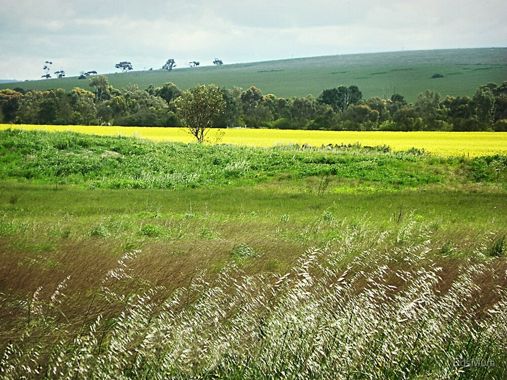 *Country at its Best - Balliang, Vic. Australia* by EdsMum