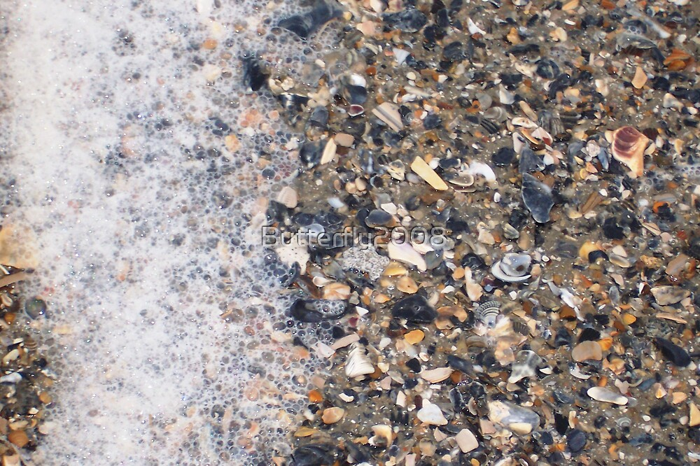 Shells on shore by Butterfly2008