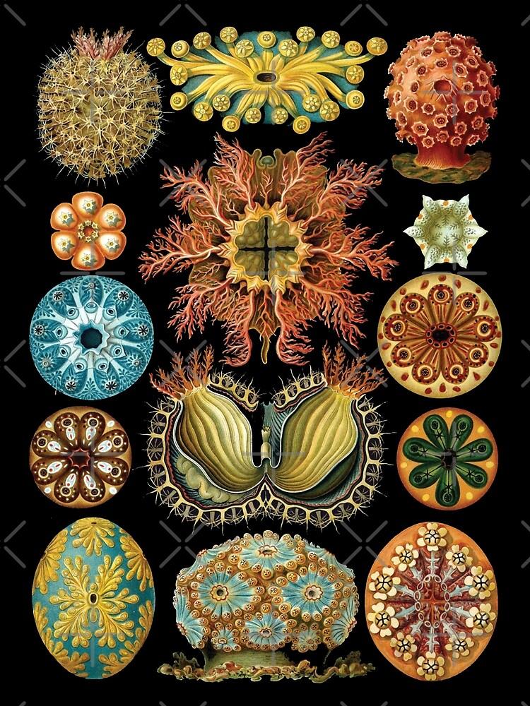Haeckel illustration by monsterplanet
