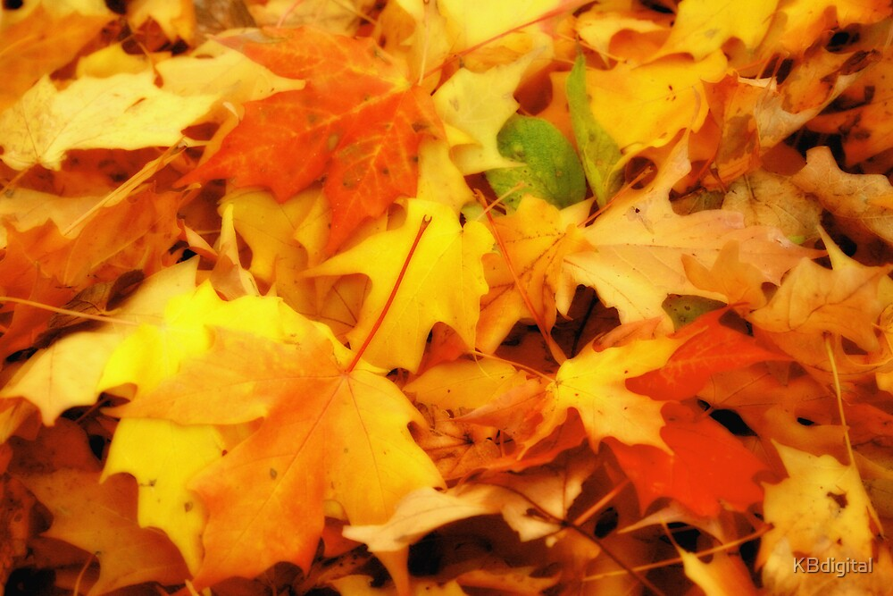 Fall Leaves II by KBdigital