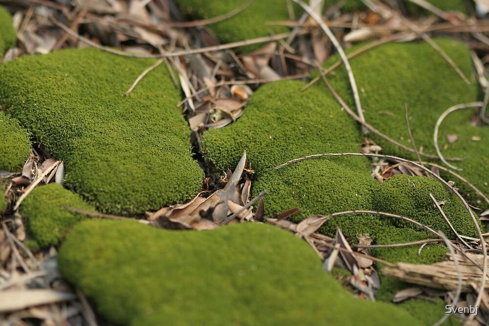 Tuckwell Road moss landscape by Svenbj