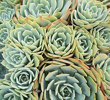 Succulentville by RichCaspian