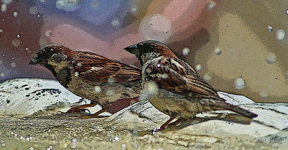 Birds Bathing by Chet  King