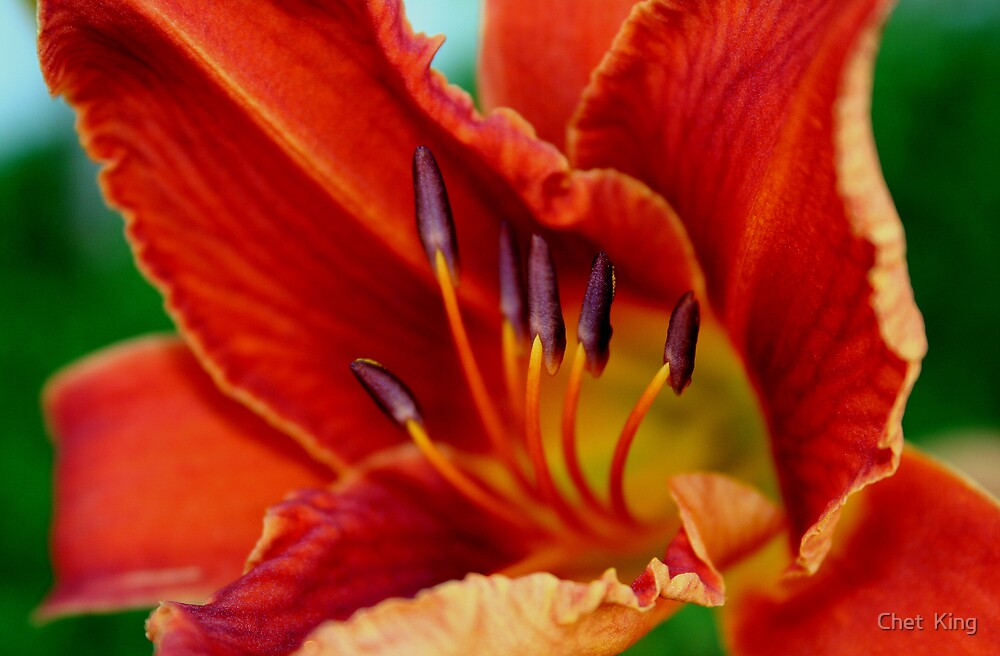 Have A  Lily Day by Chet  King