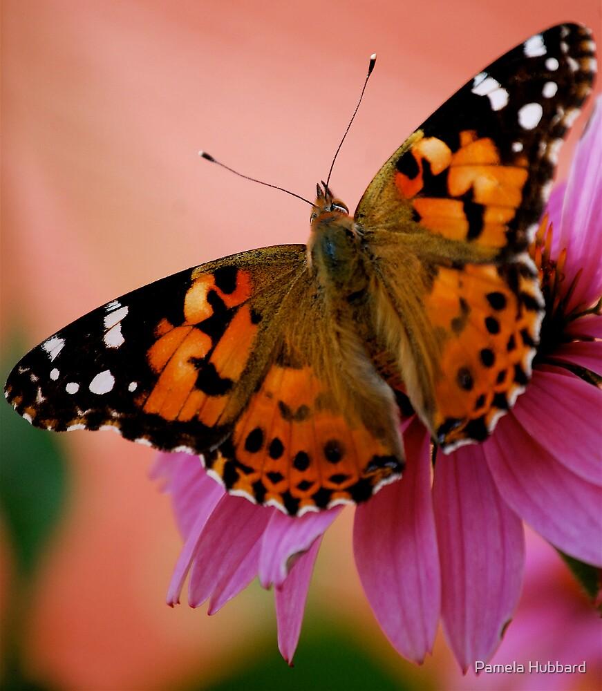 The Monarch by Pamela Hubbard