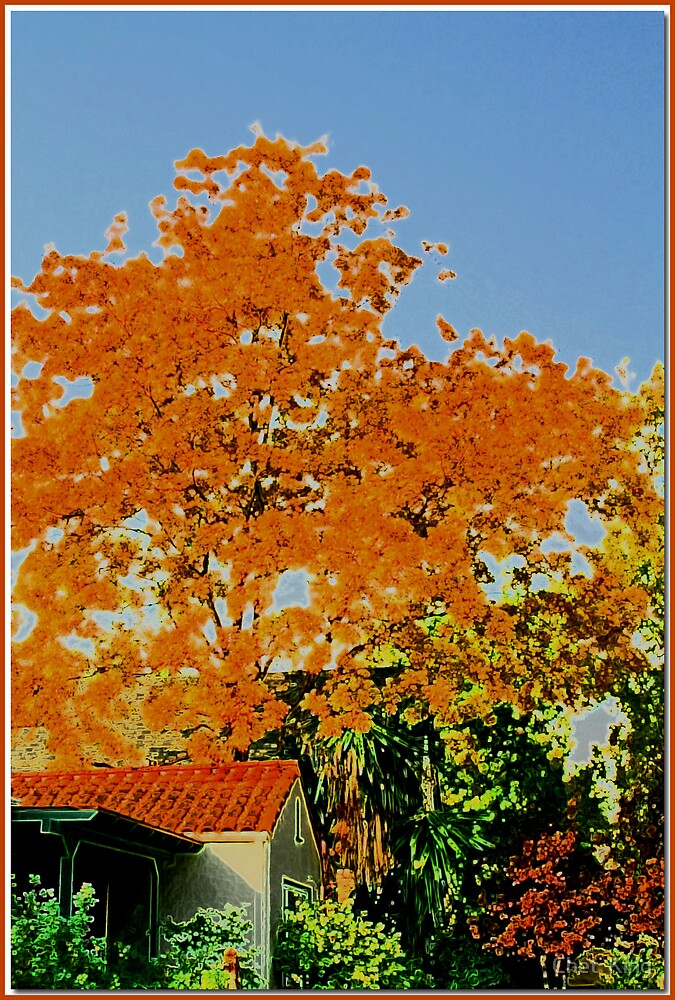 SoCal Autumn by Chet  King