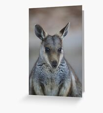 whistful wallaby Greeting Card