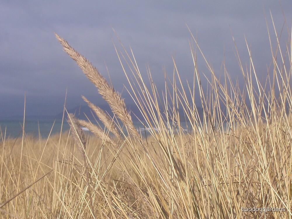 Golden Dunes by twodoggardens