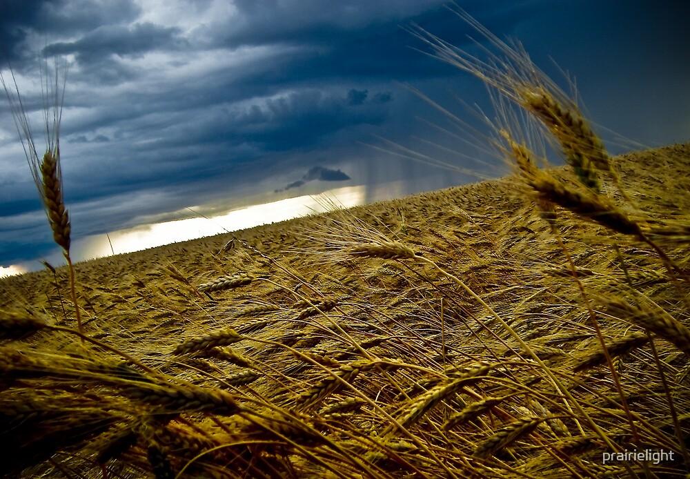 Harvest Storm by prairielight