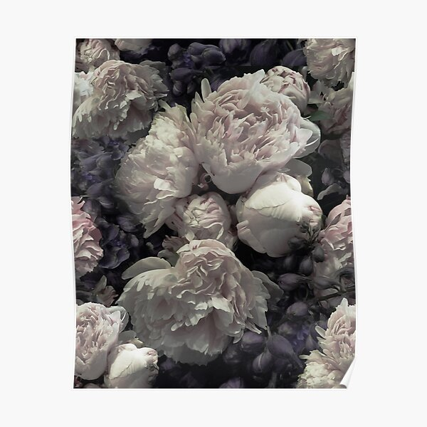 Peonies pink old masters style Poster