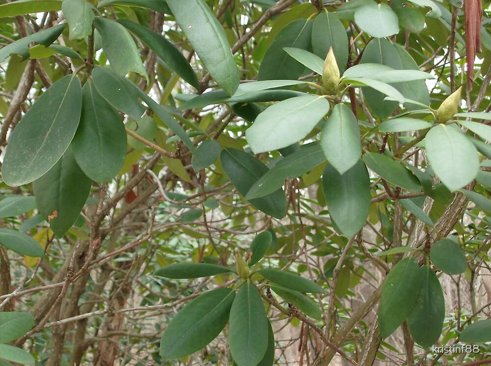 green leaf by kristinf88
