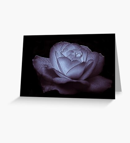 Lavender Glow Greeting Card