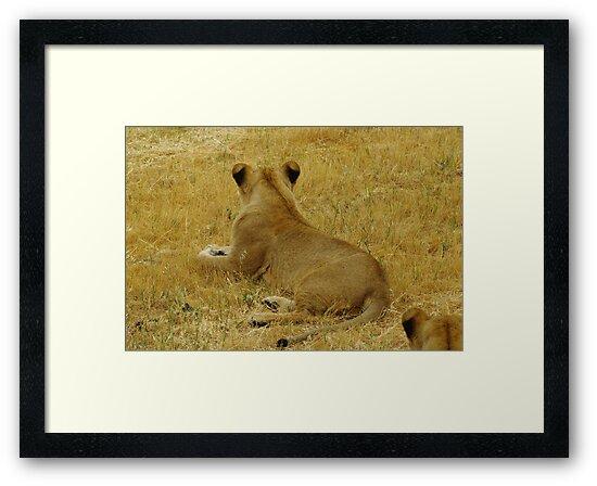 Lioness by Biggzie