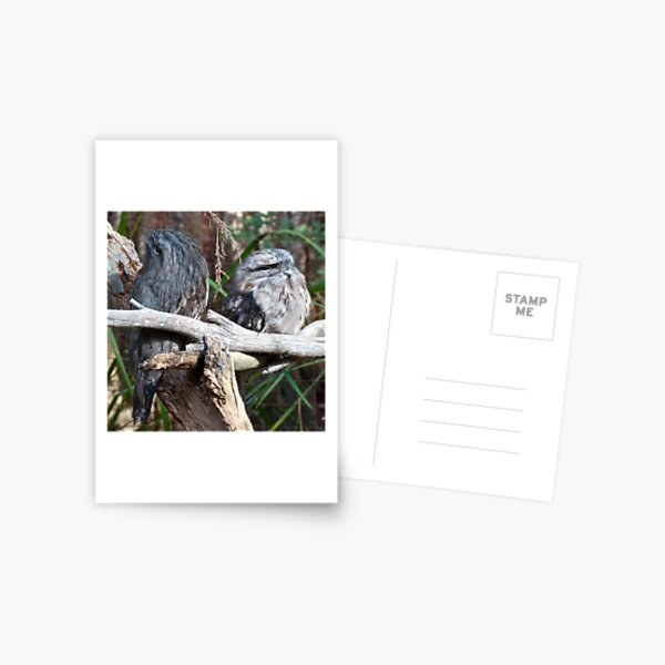 FROGMOUTH ~ Tawny Frogmouth J5VCCL6A by David Irwin ~ WO Postcard