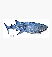 Whale Shark 2 Photographic Print