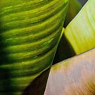 Banana Leaf by Dency Kane