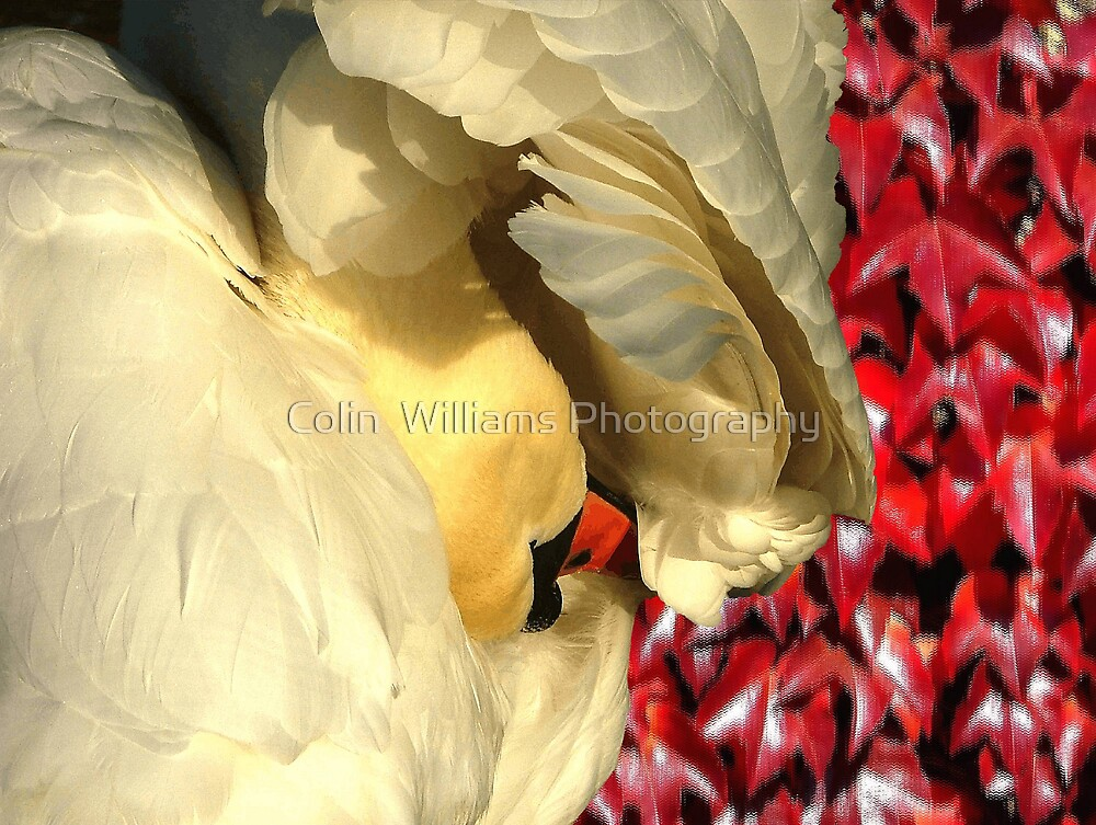 SwanFall by Colin  Williams Photography