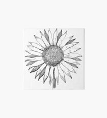 Sonnenblume Galeriedruck