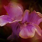 Purple Twins by Alexandra Lavizzari