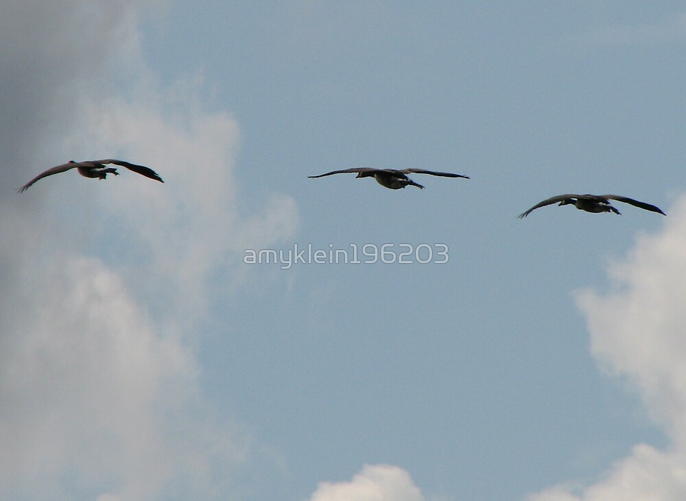 Gliding Geese  by amyklein196203
