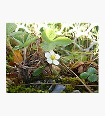 Flower among weeds Photographic Print