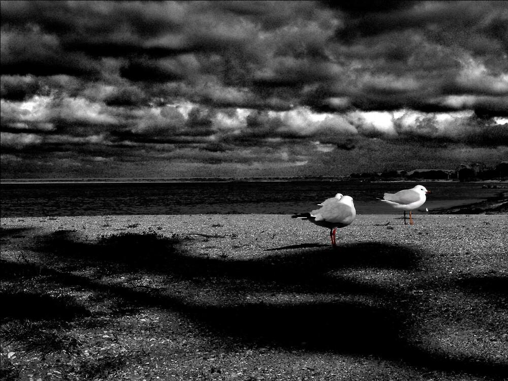 Gulls by Simmone