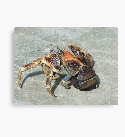 Robber Crab - Christmas Island Canvas Print