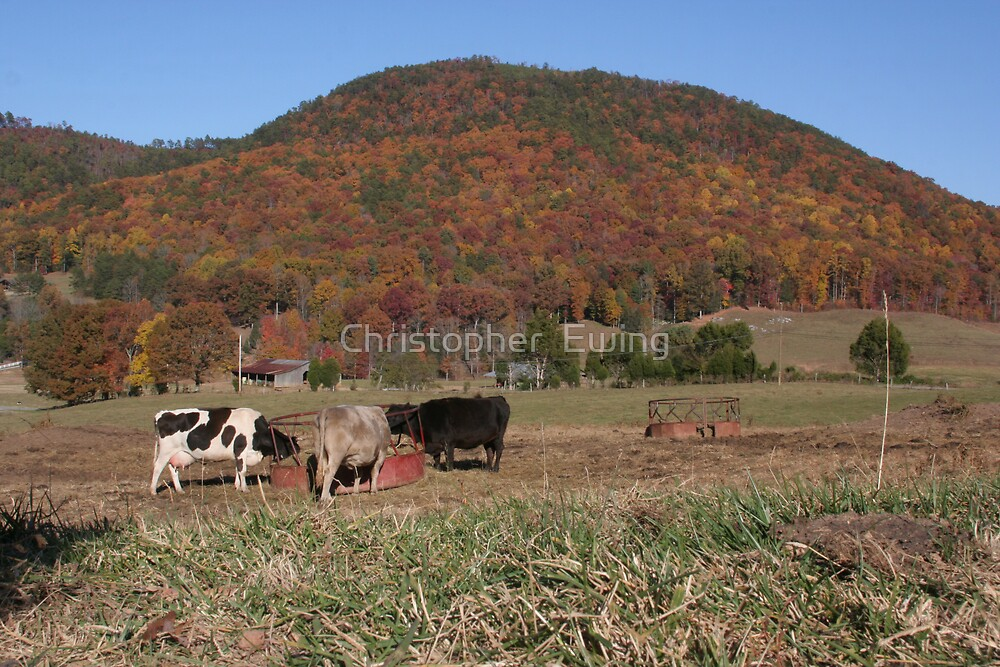 grazing with the colors by Christopher  Ewing