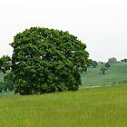 Hillside View - Lone Tree by BlueMoonRose