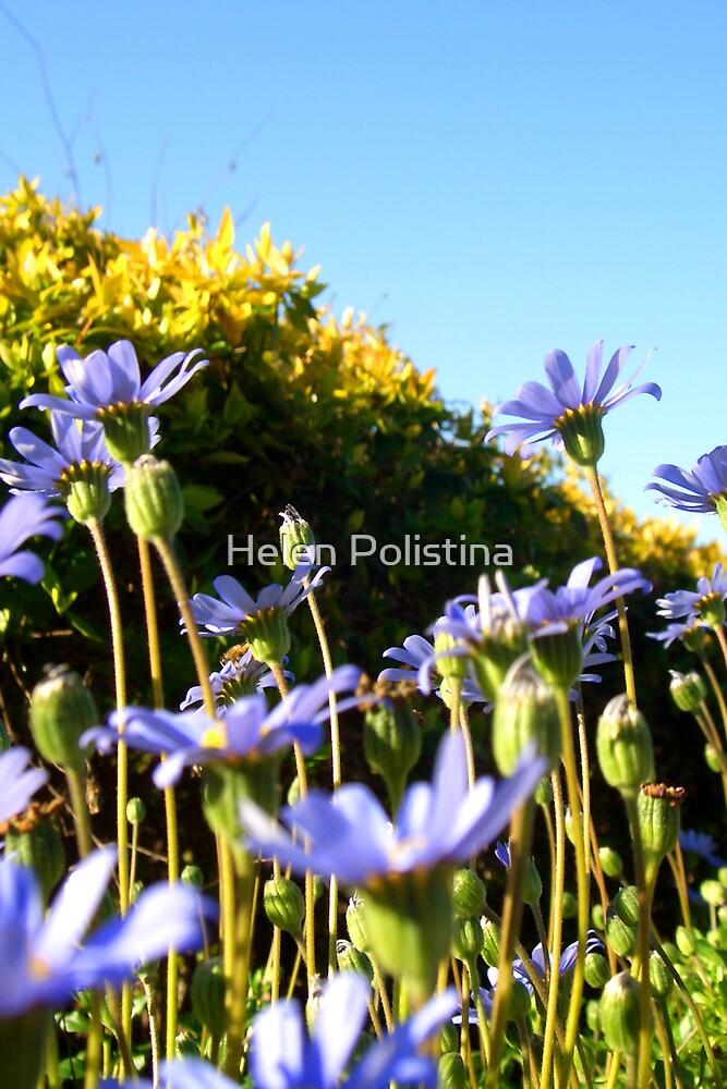 Mt Daisy by Helen Polistina
