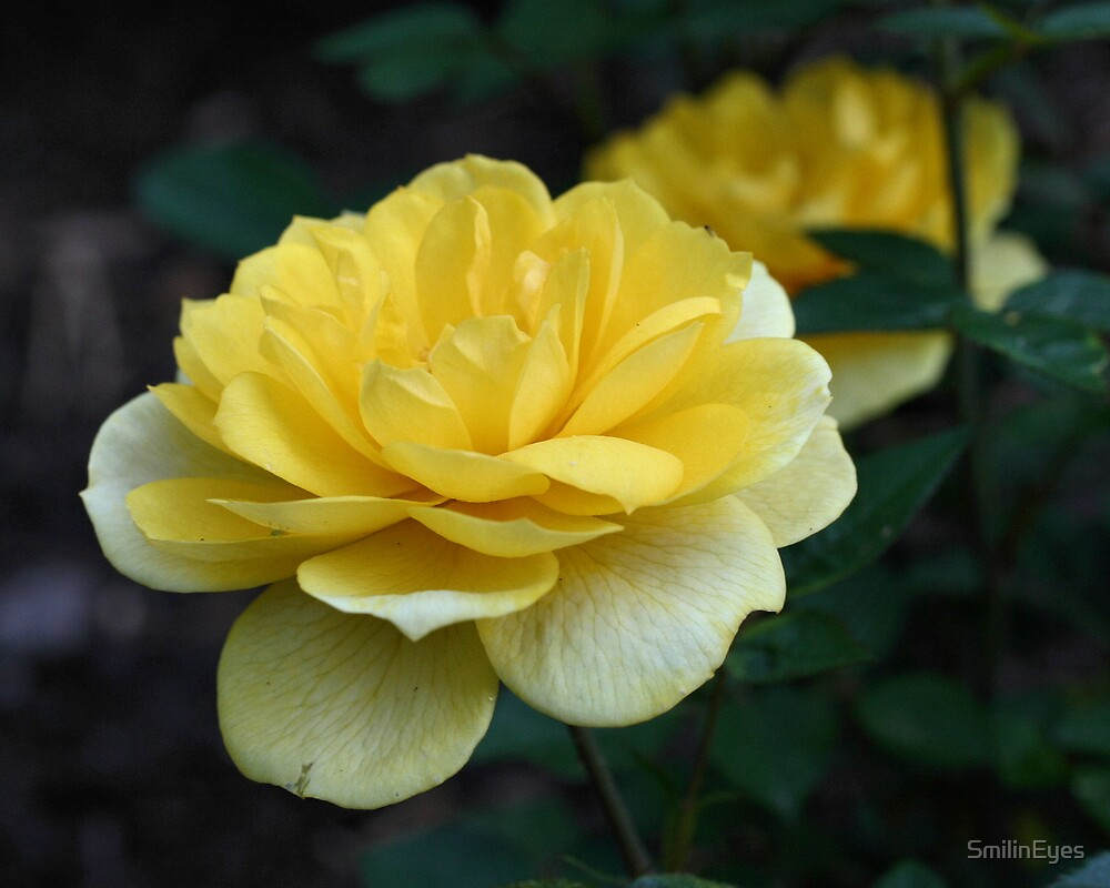 Yellow Rose by SmilinEyes
