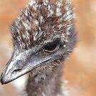 Emu by Doug Cliff