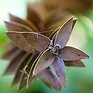 5 pointed star  by Prismatique