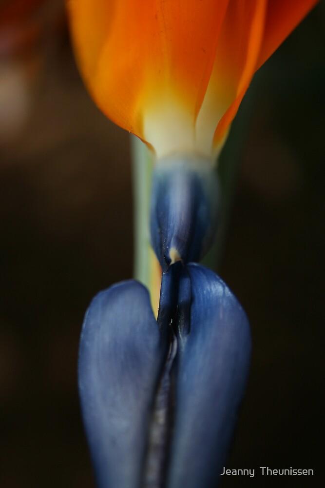 Strelitzia  by Jeanny  Theunissen